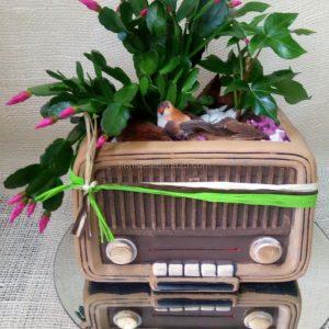 Radio Vintage de plantas naturales